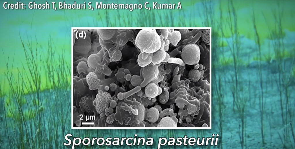 Бактерии защитят бетон от разрушения