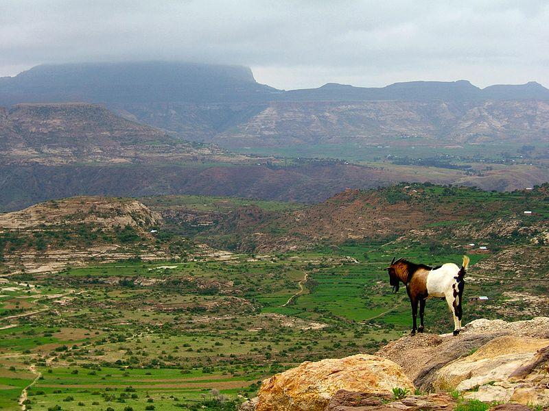 Эфиопское нагорье и гора Рас-Дашен на заднем плане. Автор: Creative Commons Attribution-Share Alike 2.0 Generic