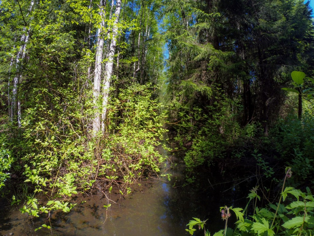 Лес в Ленинградской области