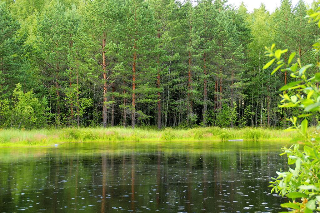 Лес в Ленинградской области. Источник фото: https://www.1zoom.ru/Природа/