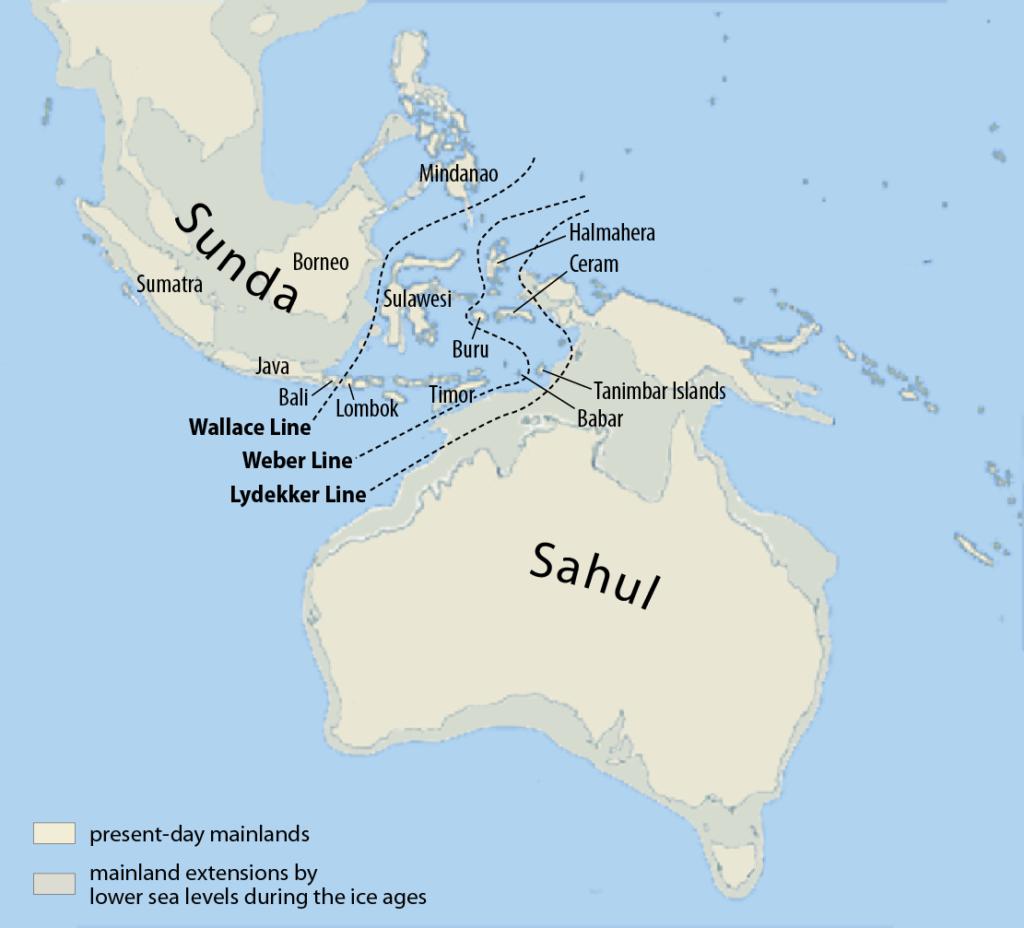 Сахул и Сундаланд во время последнего ледникового максимума, когда уровень моря был на 150 м ниже нынешнего. Район между азиатским и австралийским шельфами носит название Уоллесия. Теперь на дне