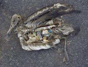 Пластик экологически опасен для фауны