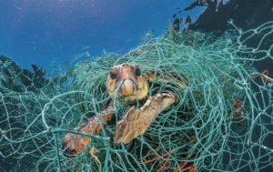 Пластиковые сети экологически не пригоднее для применения