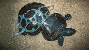 Влияние пластика на экологию животных