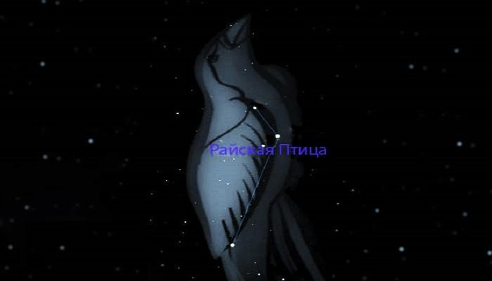 Созвездие Райская Птица, относящееся к околополярным